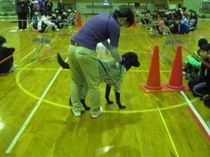 盲導犬 060