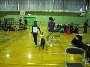 盲導犬 097